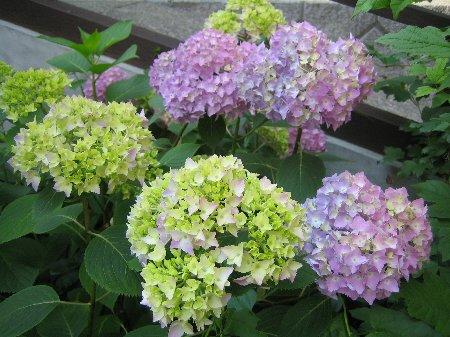 Log Garden June  No1_c0038619_0592371.jpg