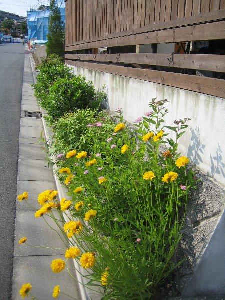 Log Garden June  No1_c0038619_0593043.jpg