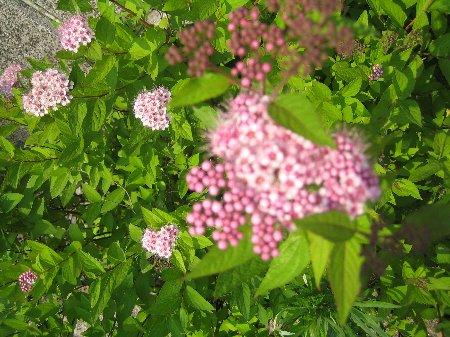 Log Garden June  No1_c0038619_0593730.jpg