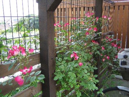 Log Garden June  No1_c0038619_0594491.jpg