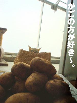 b0080632_19203062.jpg