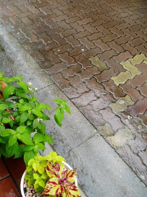 梅雨らしい。_c0010936_15405083.jpg
