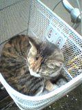 ネコとおさんぽ_a0021476_15243990.jpg