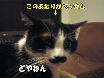 b0041182_024147.jpg