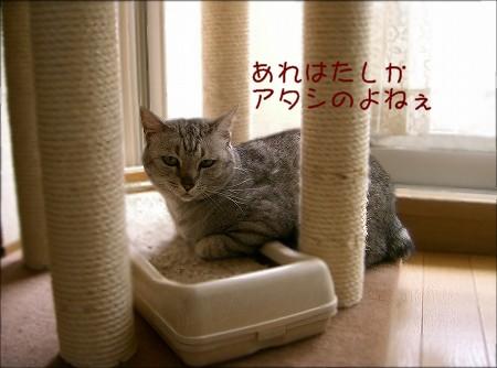 d0005397_1235570.jpg