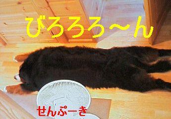b0090201_17435252.jpg