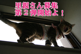 f0101903_0132132.jpg