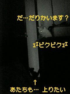 f0082938_148546.jpg