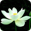 c0011148_21192365.jpg