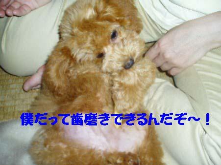 f0061283_8312178.jpg
