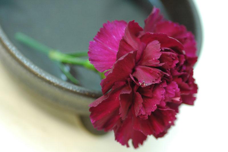 カーネーション パープルパスカル 紫
