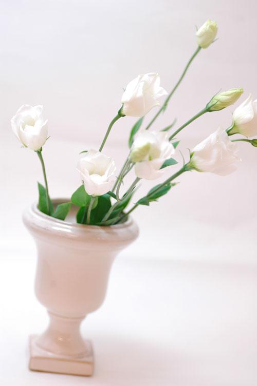 トルコキキョウ ピッコロホワイト 白