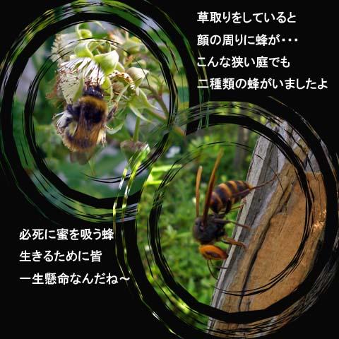 b0019313_1822422.jpg