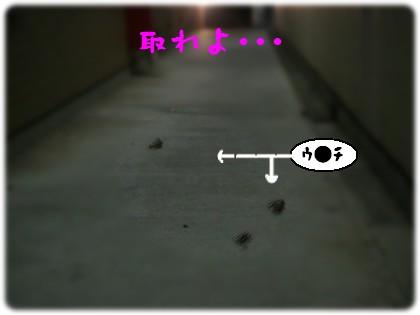 b0078073_22553573.jpg