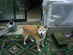田宮亜紀さんに会いに行きました。_a0026127_23142990.jpg