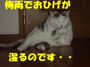 f0064432_23231197.jpg
