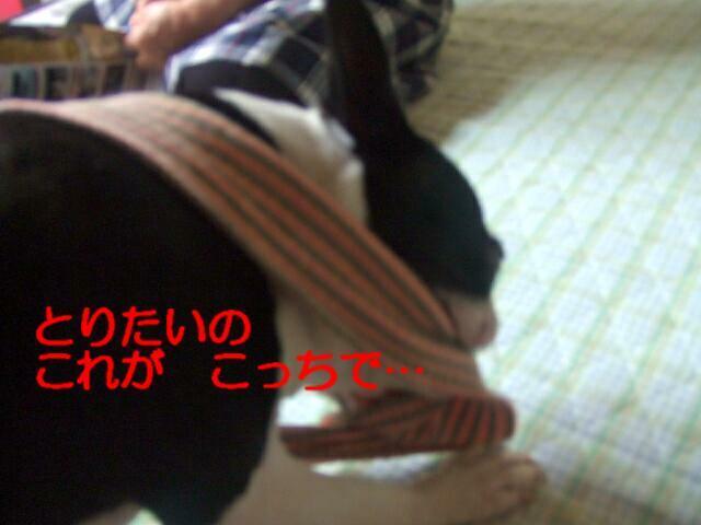 f0059334_10242177.jpg