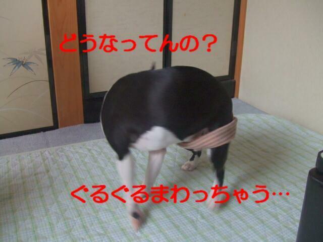 f0059334_10244511.jpg