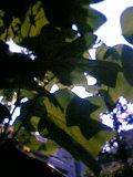 b0060945_16452231.jpg