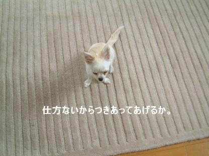 f0101658_2364337.jpg