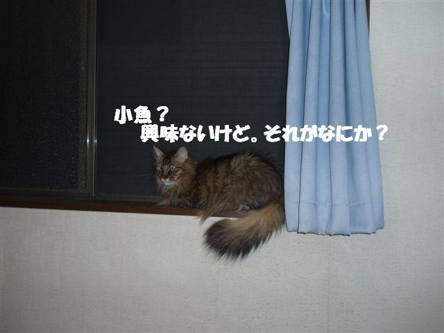 c0000189_14141614.jpg