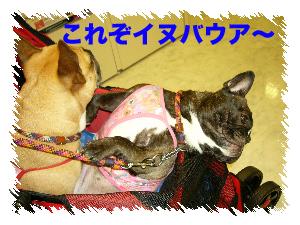 b0026701_22185149.jpg