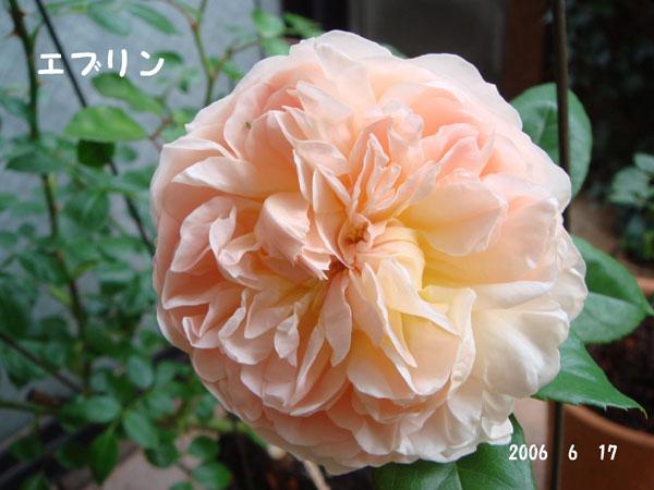 f0057006_13553016.jpg