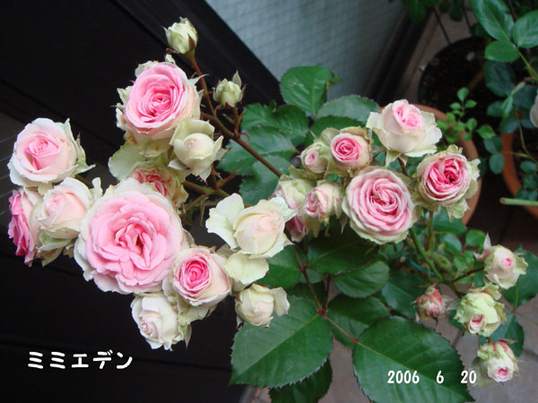 f0057006_13561132.jpg