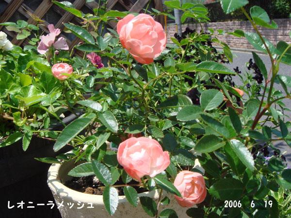 f0057006_1357208.jpg