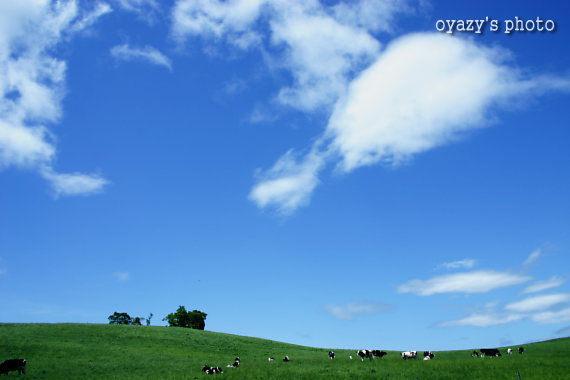 北海道の自然_a0071514_20534055.jpg