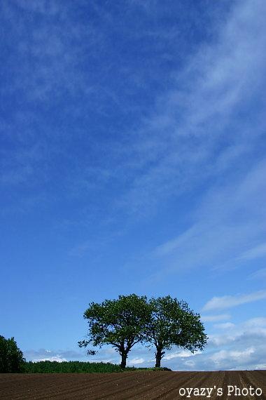北海道の自然_a0071514_2054532.jpg
