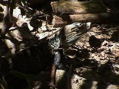 Parque Nacional Mnuel Antonio_e0055023_1105594.jpg