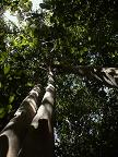 Parque Nacional Mnuel Antonio_e0055023_1155911.jpg