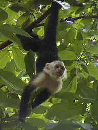 Parque Nacional Mnuel Antonio_e0055023_1292642.jpg