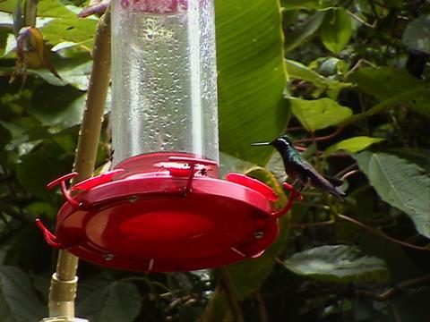 Santa Elena Nacional Parque_e0055023_15261483.jpg