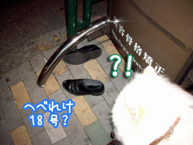 ホスト犬はつらいよ?_c0062832_1734072.jpg