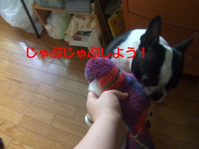 f0059334_912597.jpg