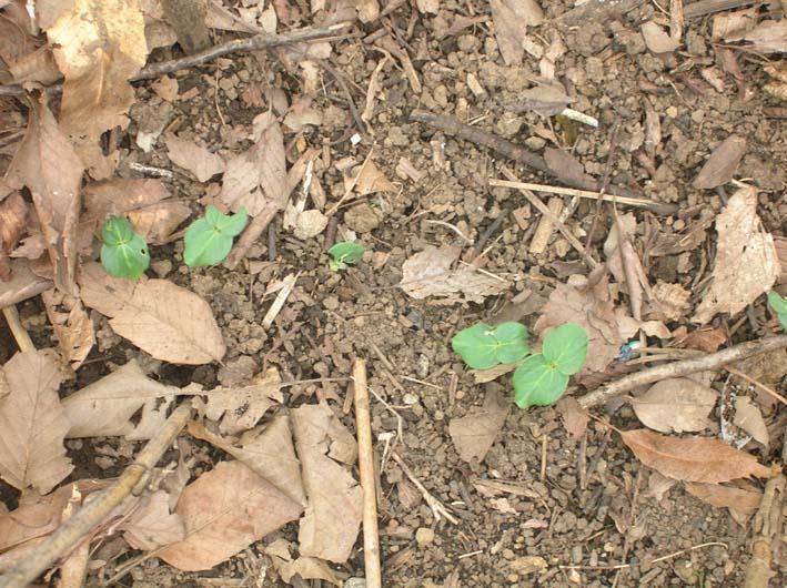 梅雨の中休みを狙ってジャガイモを全て収穫!(06・6・20)_c0014967_2015317.jpg