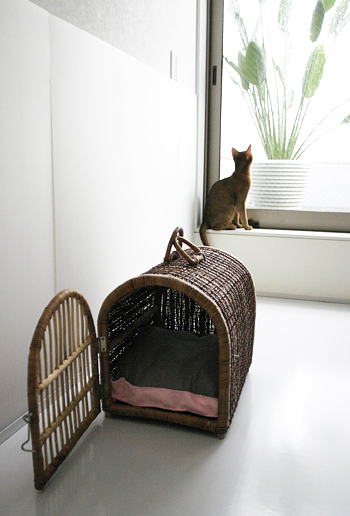 [猫的]クッション作戦_e0090124_9253769.jpg