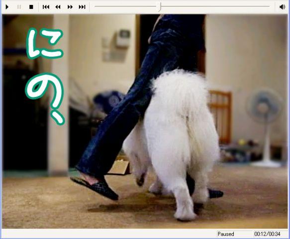 Shall we dance ?_c0062832_17135779.jpg