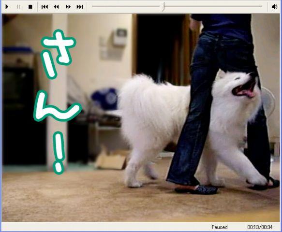 Shall we dance ?_c0062832_1714550.jpg