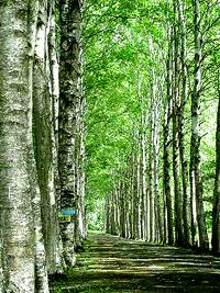 森林浴_b0073937_16482297.jpg