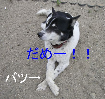 f0053952_10135583.jpg