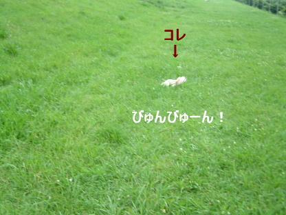 f0101658_21124026.jpg