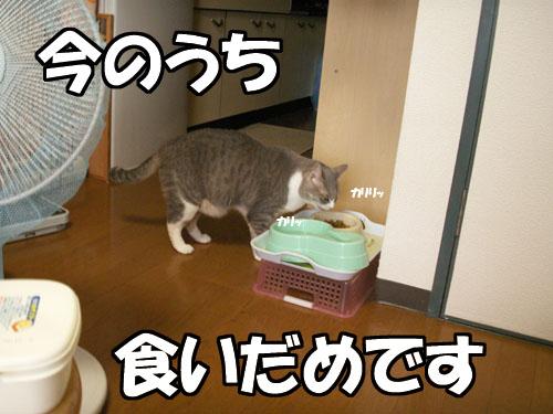 """値上がり(-\""""-;)_b0083267_2272225.jpg"""