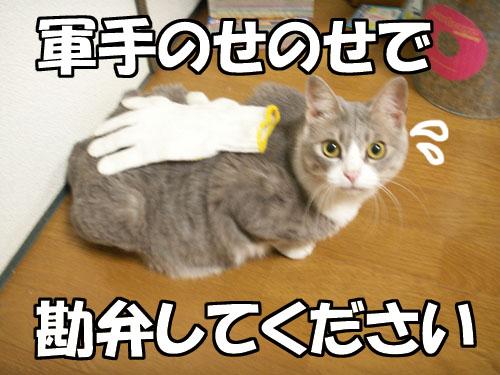 """値上がり(-\""""-;)_b0083267_2273071.jpg"""