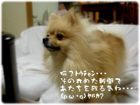 b0078073_2239636.jpg