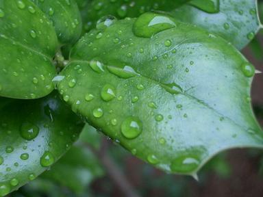 雨にぬれた葉っぱいっぱい_b0087994_22265443.jpg