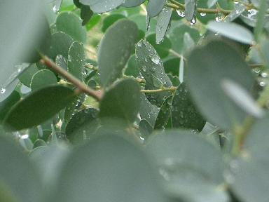 雨にぬれた葉っぱいっぱい_b0087994_22271317.jpg