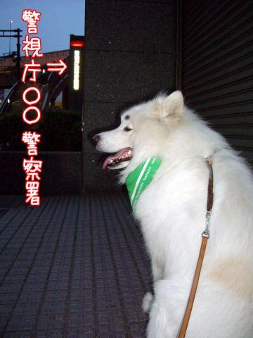 麻呂のお巡りさん♪之巻_c0062832_19413567.jpg